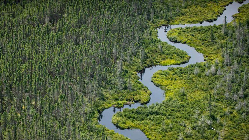 Wetlands near Moosehead Lake in Maine, USA