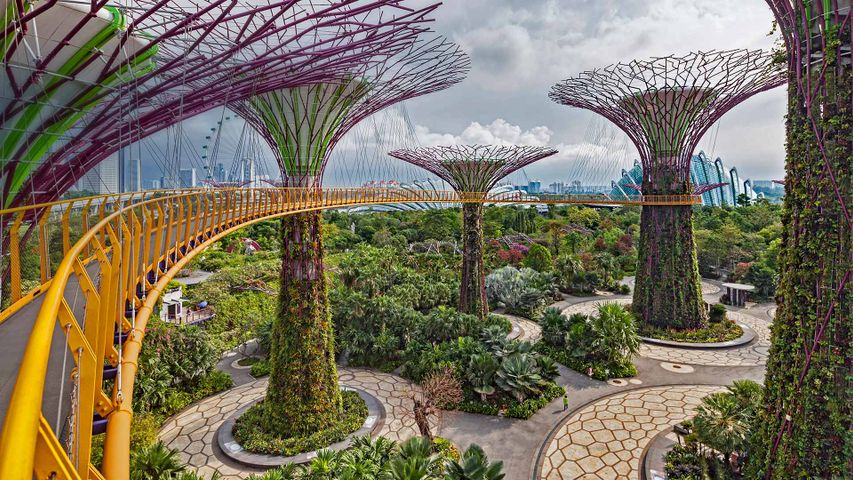 The Supertree Grove in Singapore's Gardens by the Bay