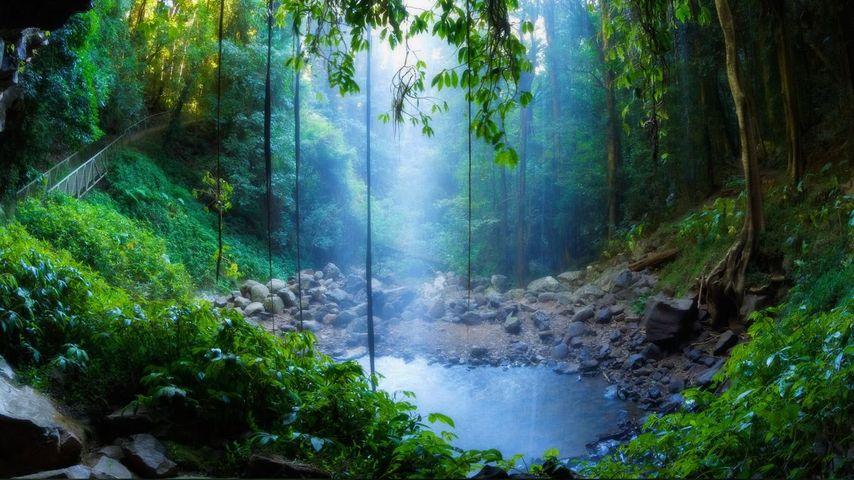 Crystal Shower Falls dans le parc national Dorrigo, Nouvelle-Galles du Sud, Australie