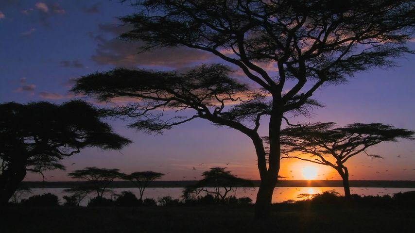 Lake Amboseli, Amboseli National Park, Kenya