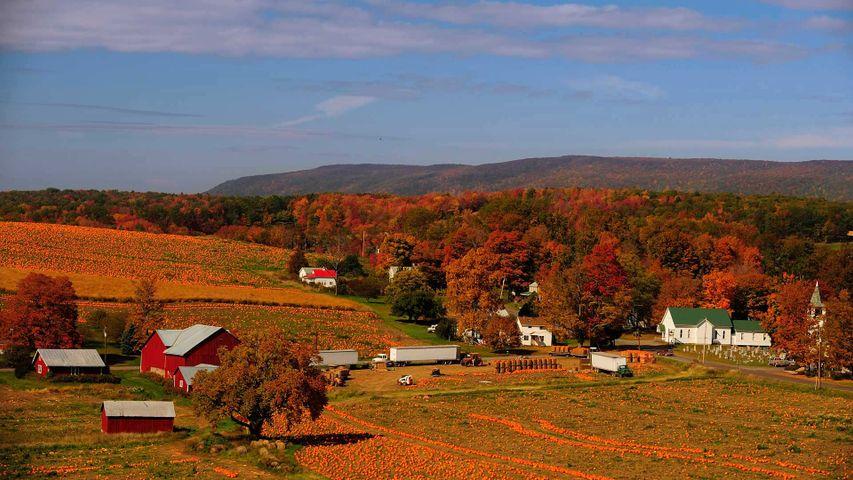 「パンプキン・パッチ」米国ペンシルバニア州, コロンビア郡