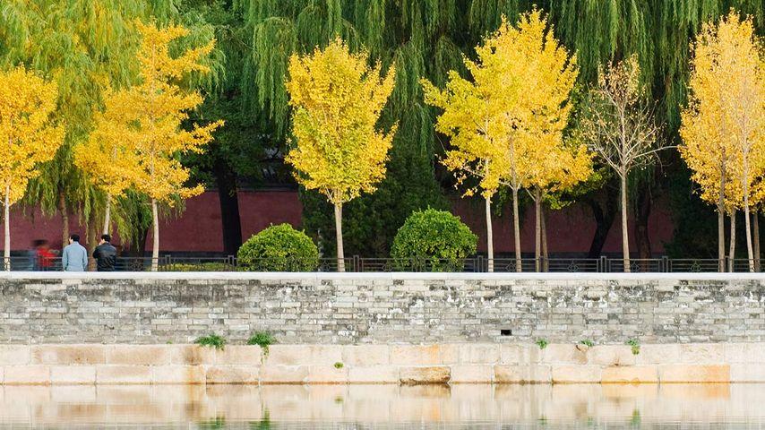 中国,北京,秋色映在紫禁城的护城河中