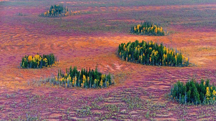 Autumn in the East Siberian taiga, Russia