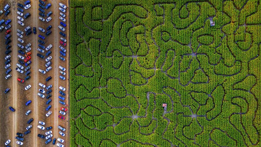 A corn maze in Petaluma, California