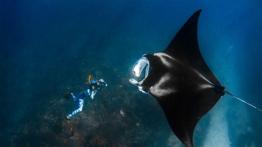 「ニンガルー沖のマンタとカメラマン」オーストラリア