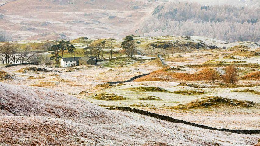 Hoar frost on vegetation near Coniston, Lake District