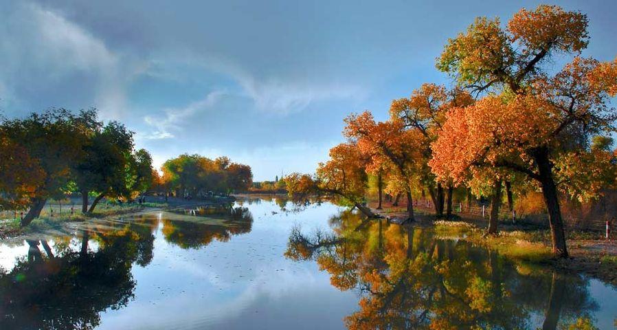 携程&MSN十年旅行摄影大赛作品精选:内蒙古额济纳旗的胡杨林