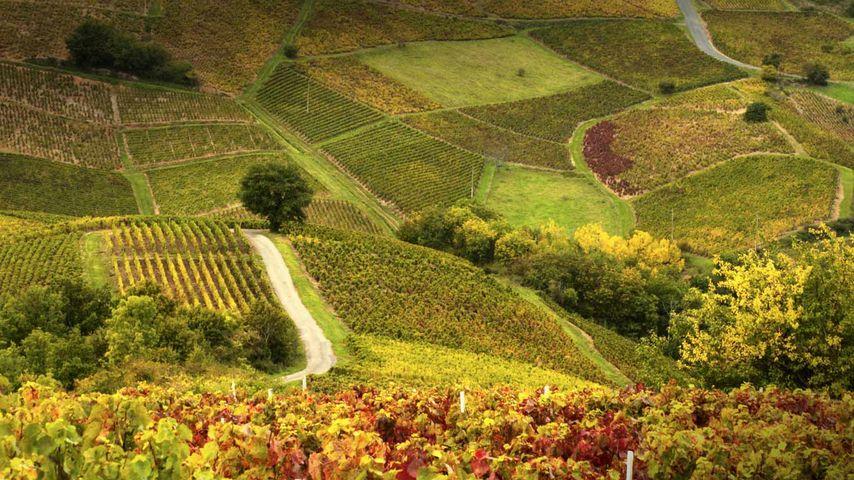 「ボジョレーのブドウ園」フランス