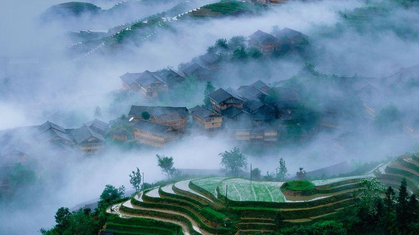Reisterrassen in Longsheng, Guangxi, China
