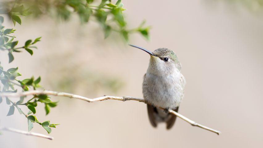 animal bird branch perched white sparrow oscine grey