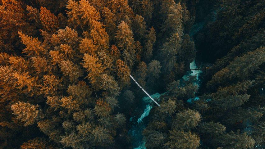 Aerial view of trees growing in a forest, Vancouver