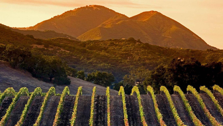 Central Coast vineyards in Arroyo Grande, California
