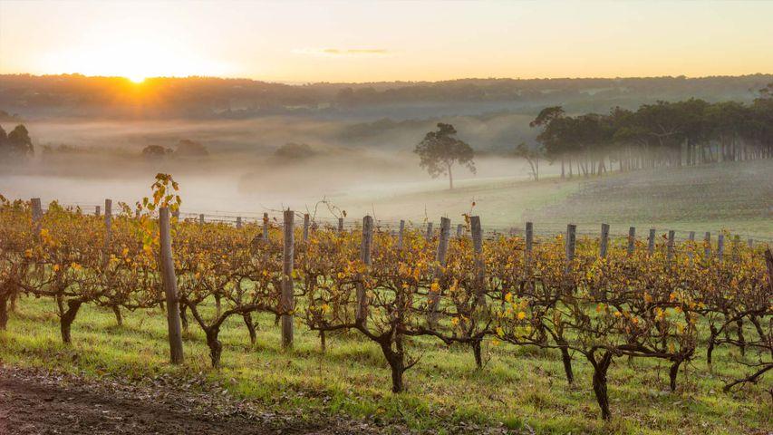 Dawn in the vineyards near Margaret River, Australia