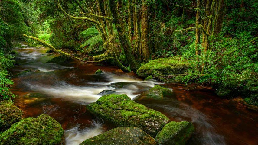 Franklin-Gordon Wild Rivers National Park, Tasmania