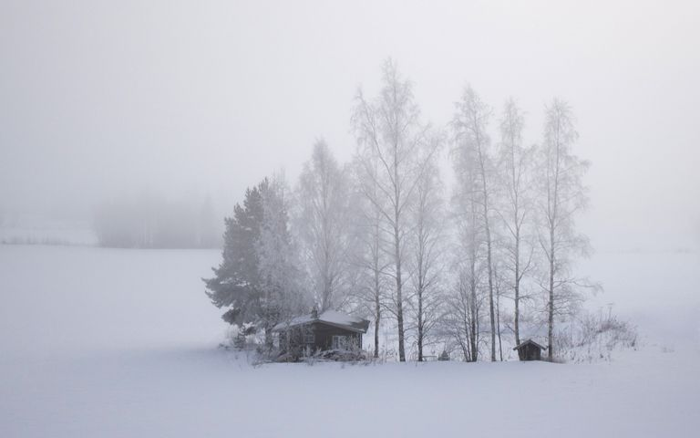snow outdoor tree sky fog landscape covered cold
