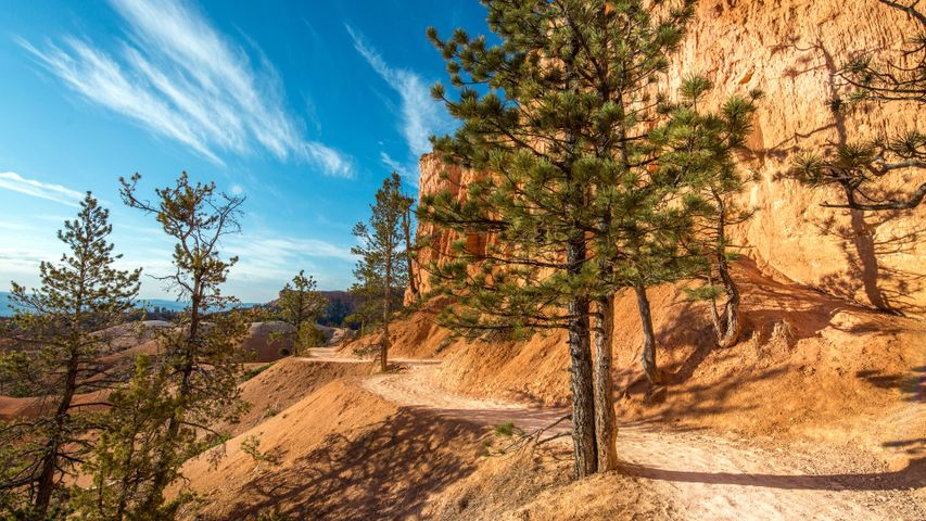 tree outdoor valley sky mountain landscape cloud canyon