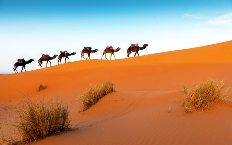 23+ Desert Wallpaper Camel PNG