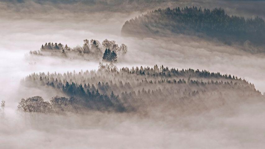 Mit Tannen und Fichten bewaldete Hügel bei Meschede, Sauerland, Nordrhein-Westfalen