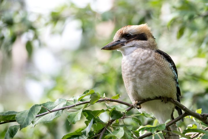 tree outdoor animal bird sitting branch sparrow perched