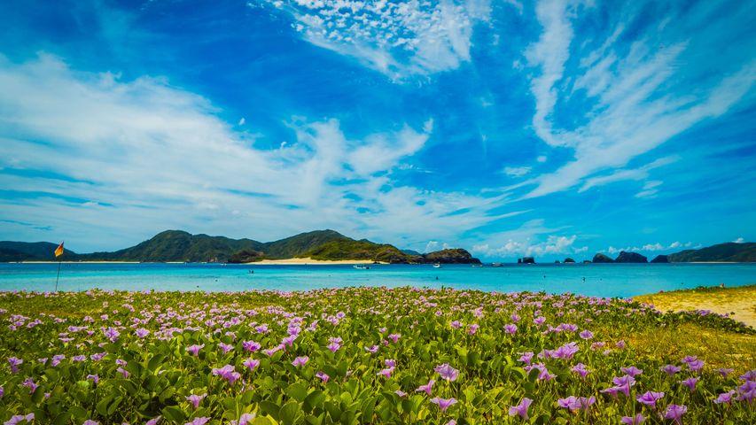 Japanese Islands PREMIUM Windows 10 Theme