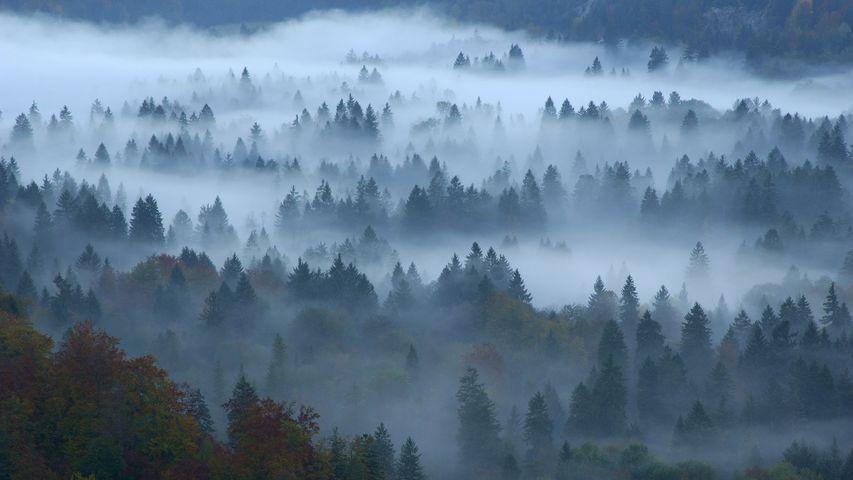 Herbstlicher Mischwald im Nebel, Füssen, Allgäu, Bayern