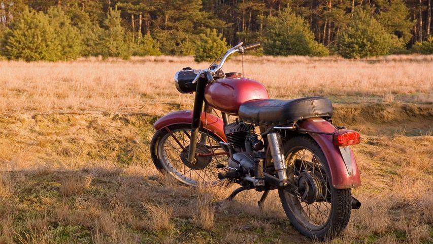 grass outdoor motorcycle tree wheel tire land vehicle vehicle