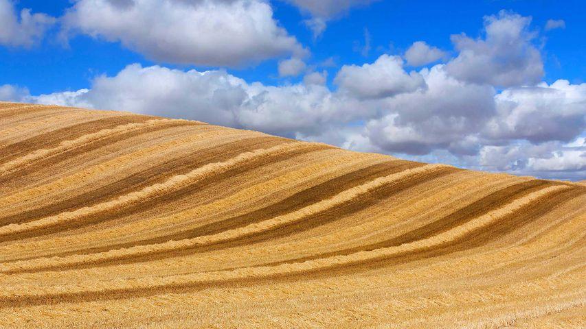 Campos de trigo bajo el cielo de Castilla, Valladolid