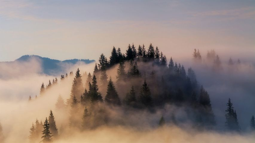 Fog shrouds the Bavarian Alps in Germany