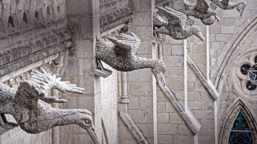 Grotesques of  Ecuadorian seabirds on the Basílica del Voto Nacional in Quito, Ecuador