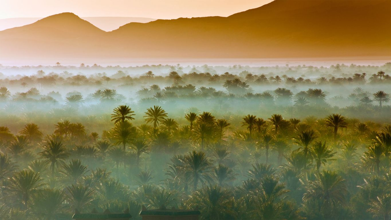Date palm groves near Zagora, Morocco