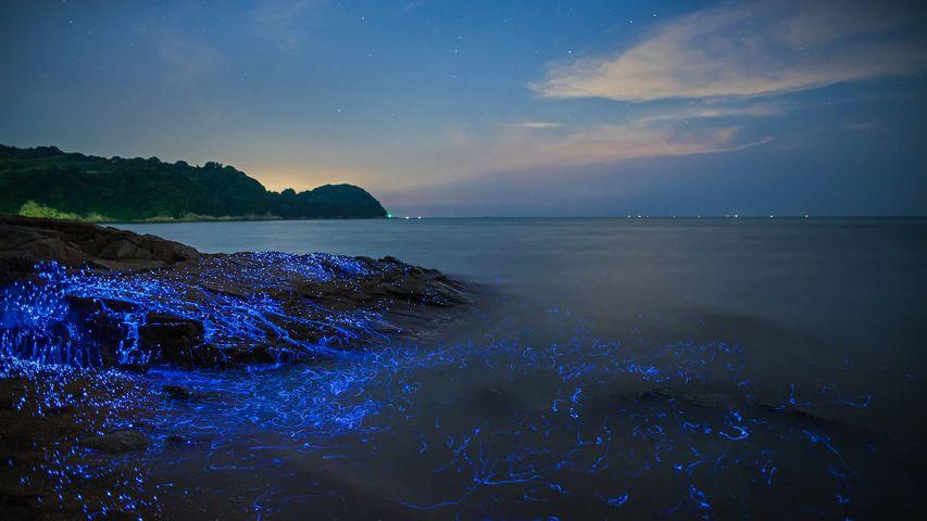 Bioluminescent sea fireflies along the shore of Okayama, Japan
