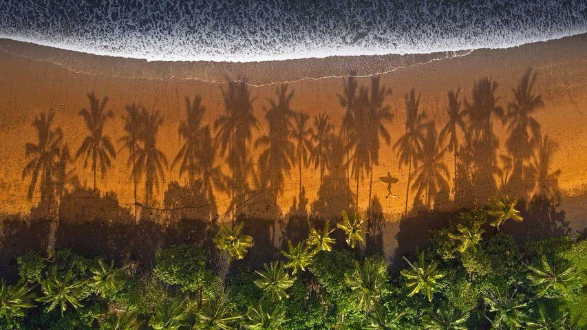 梅德威海滩棕榈树间散步的冲浪者,印尼巴厘岛