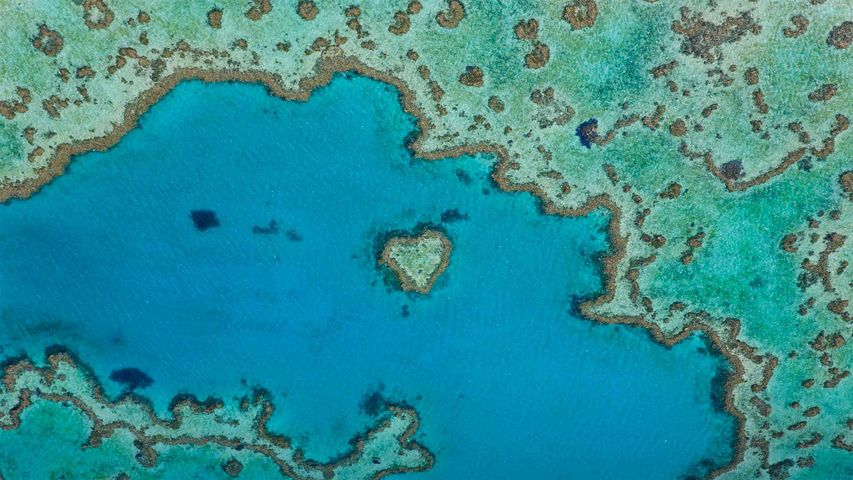 Heart Reef, part of the Great Barrier Reef off Queensland, Australia