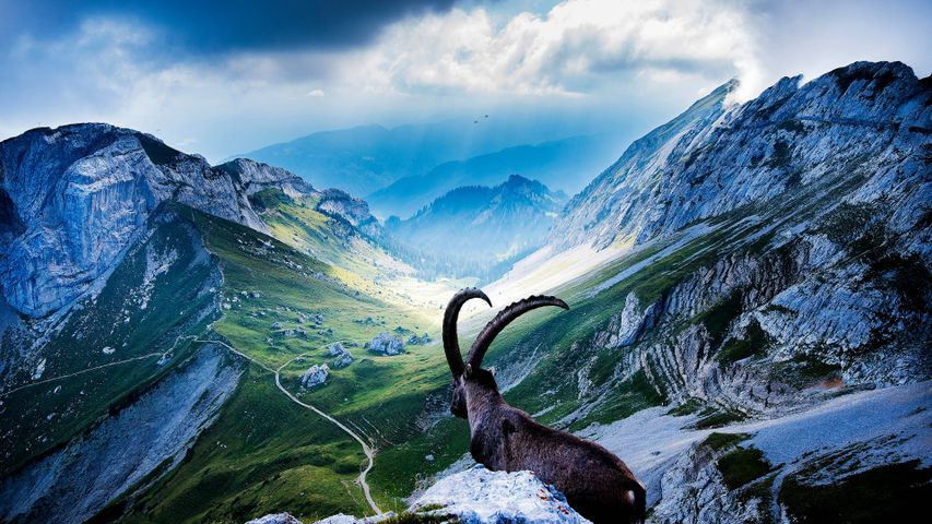 mountain sky outdoor animal nature landscape hillside day