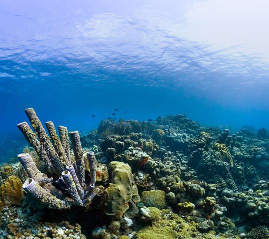 outdoor rock nature reef underwater ocean floor diving scuba