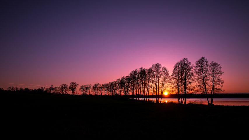 sky tree outdoor cloud landscape sunrise bridge evening
