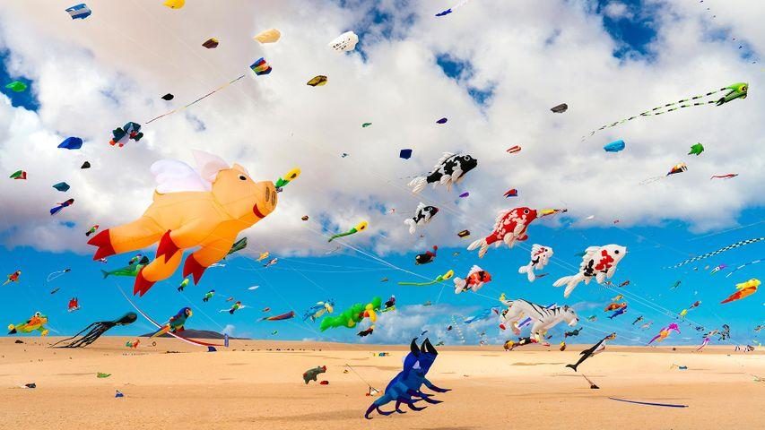 Cometas en la playa de Corralejo, Fuerteventura