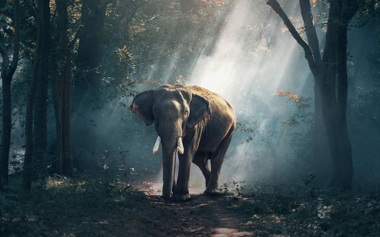 tree outdoor standing animal dirt bovine trunk elephant