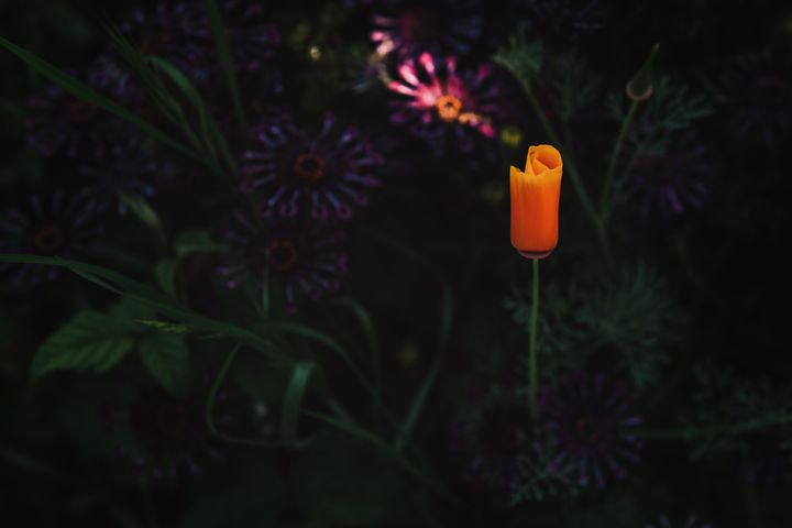 tree plant candle orange light flower lit