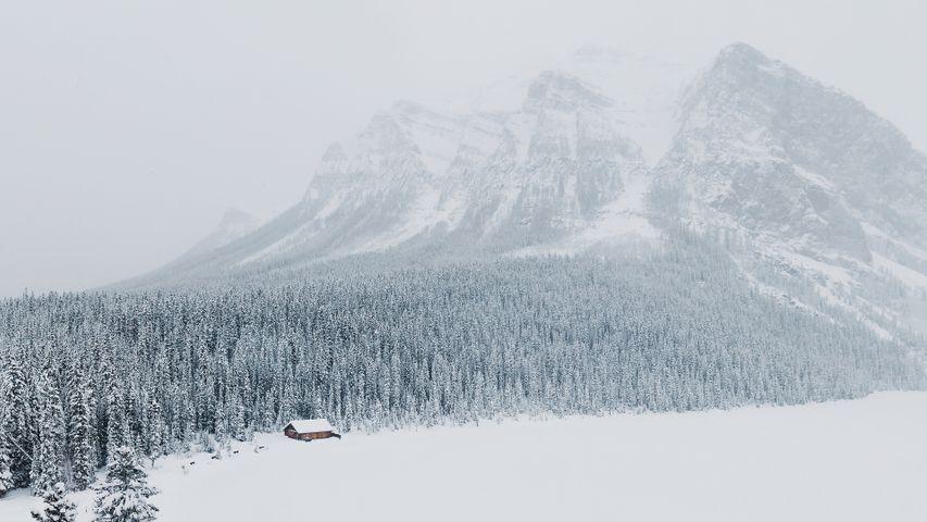 outdoor snow mountain fog nature skiing landscape tree