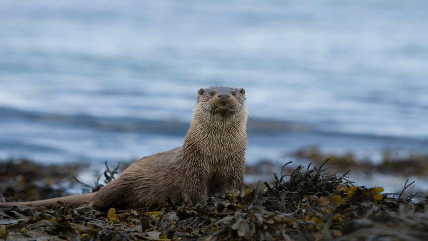 Otters Windows 10 Theme