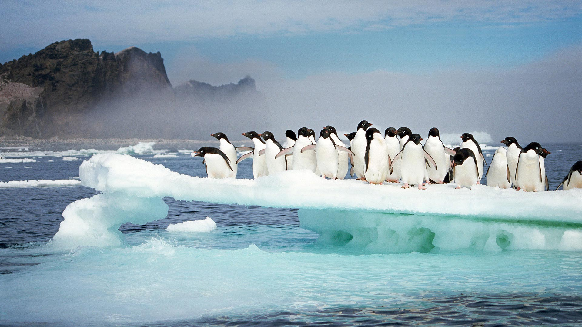 Adélie penguins at Possession Island, Antarctica