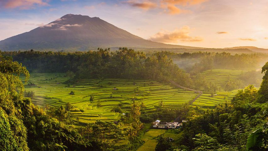 Rice fields in the Sidemen Valley, with Mount Agung in the background, Bali, Indonesia