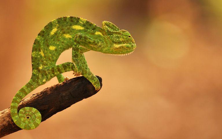 Wildlife of India Theme for Windows 10