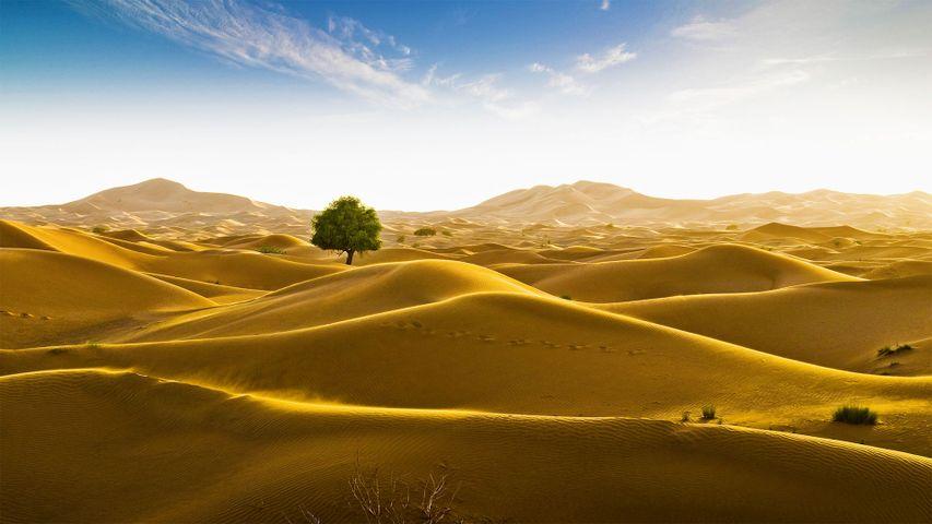Rub' al Khali desert on the border of Oman and the Emirate of Dubai