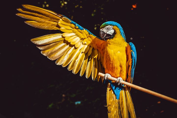 animal bird parrot colorful colored
