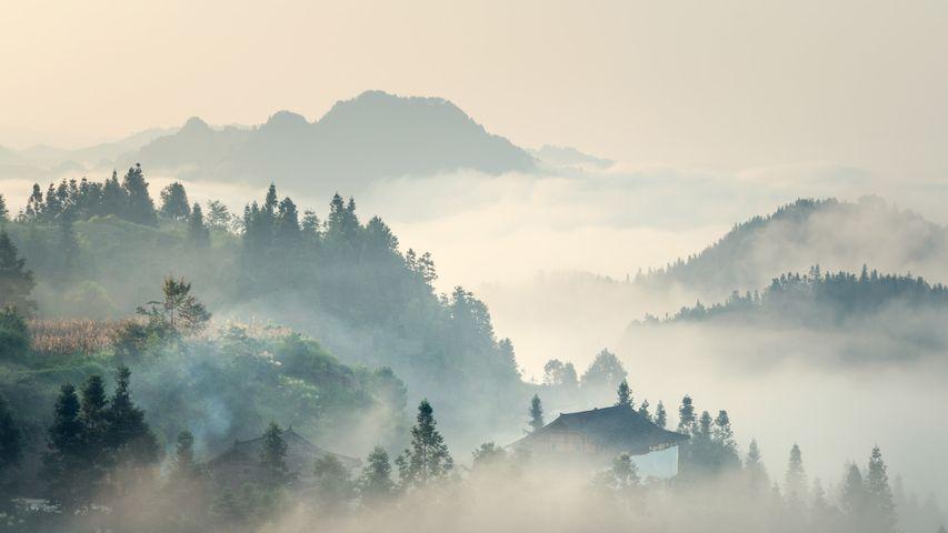 【今日清明】( © yangphoto )