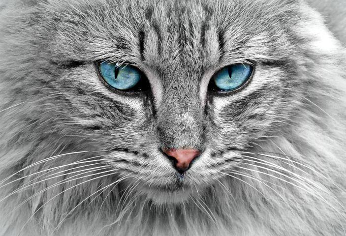 cat animal mammal domestic cat eyes carnivore feline green