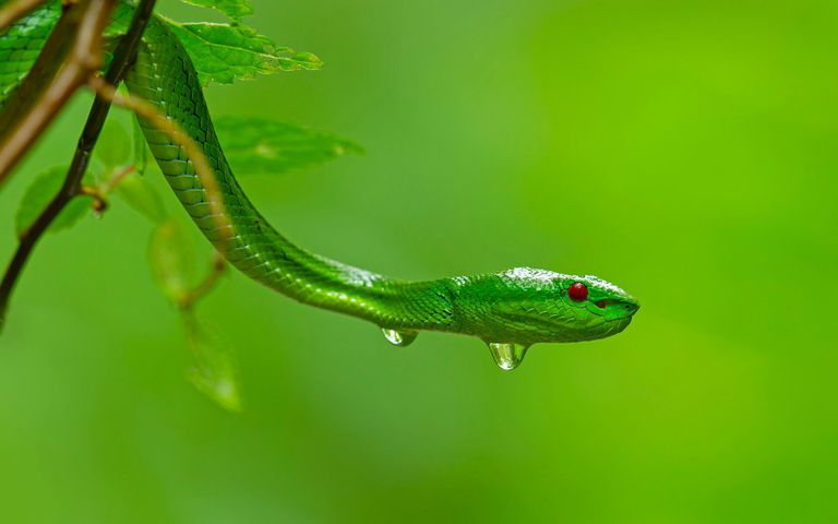 animal reptile lizard drop snake droplet caterpillar frog