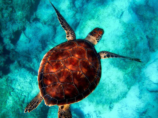 Reptile Animal Reef Turtle Peapix Free Wallpaper